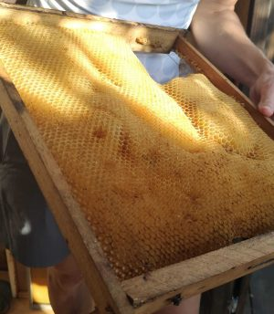 miel de Grazalema
